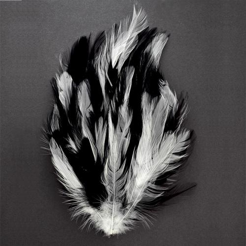 500 Pcs black hackle feathers