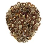 Natural Almond Ringneck Pheasant Feather Pad Applique Patch by PC, TFP-BP5120