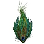 Peacock Eye Feather Pad Applique Patch by PC, TFP-P6100PPS-N