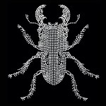 Beetle English Cut Motif by PC, H-1759